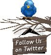 follow on twitter float